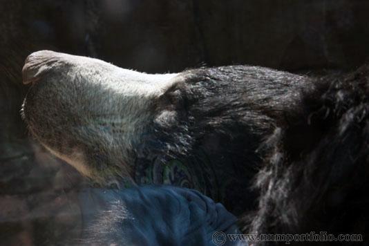Smithsonian National Zoo - Sloth Bear