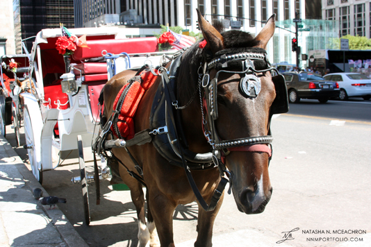 Central Park - Horse & Carriage