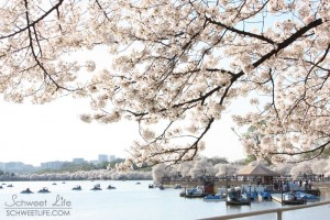 Travel Photography - Washington DC: The Tidal Basin