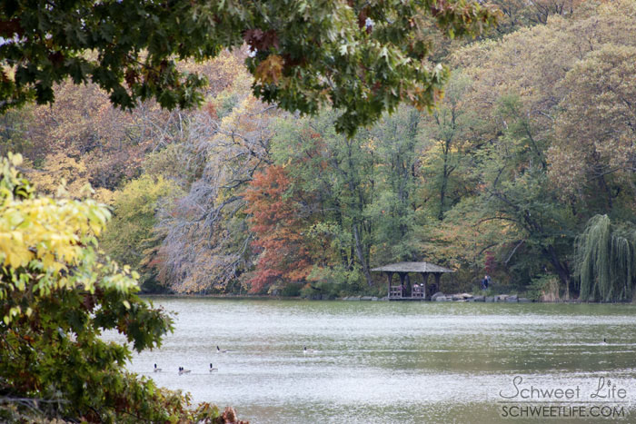 Central Park The Lake 024